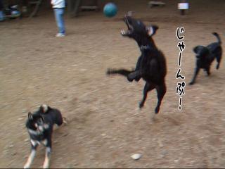 元気ジンガ(3)