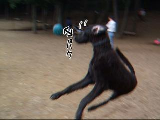 元気ジンガ(4)