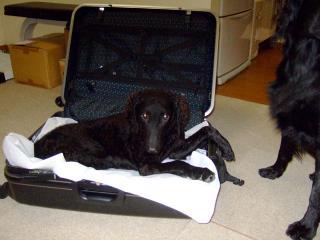 百万円とスーツケース(4)