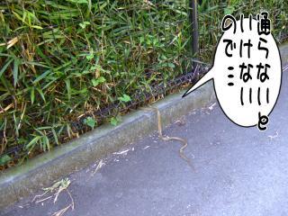 藪に消えていったC=(´。`)ふぅ(2)
