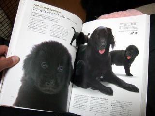 犬本紹介その33(1)