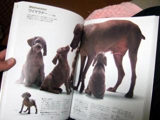 犬本紹介その33(2)