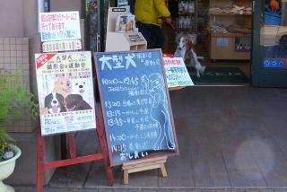 大型犬ドッグファン撮影会&運動会参加(3)