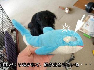 わんこおもちゃたち(3)