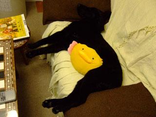 ユタポンを抱えてソファで寝るルーア君