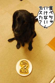 ルーアくん、2歳になりました^_^(4)