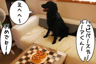 ルーアくん、誕生日ケーキを食べるの巻(1)