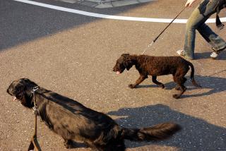 初散歩♪(1)