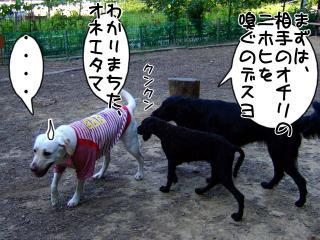 ジンガ、初ドッグラン(1)