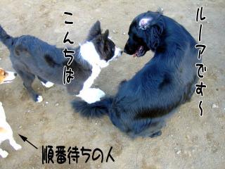 ボール遊びとは・・(1)