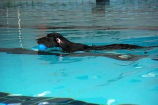 ジンガ初泳ぎに挑戦の巻(10)