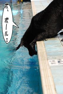 ジンガ初泳ぎに挑戦の巻(12)