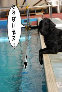 ジンガ初泳ぎに挑戦の巻(13)