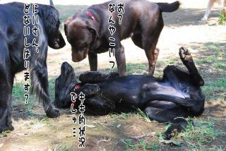昭和記念公園はどんぐり曜日(4)