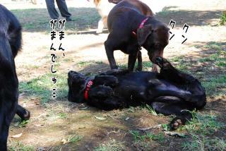 昭和記念公園はどんぐり曜日(5)