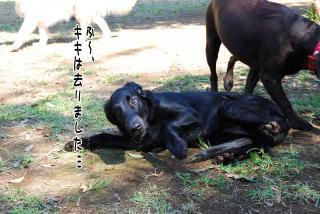 昭和記念公園はどんぐり曜日(6)