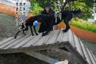 昭和記念公園はどんぐり曜日(11)