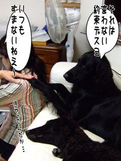 良い子(?)ルーア(2)