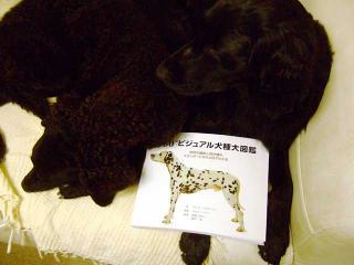 犬本紹介その41-犬図鑑(1)