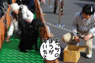大型犬ドッグファン撮影会&運動会参加(8)