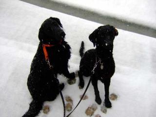 雪だ!(1)