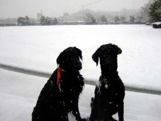 雪だ!(2)