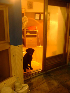 入りたくない