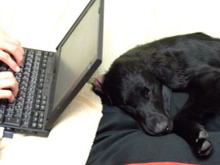 パソコンしている横で寝るルーア君