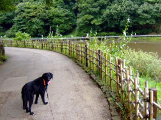 四季の森公園(4)