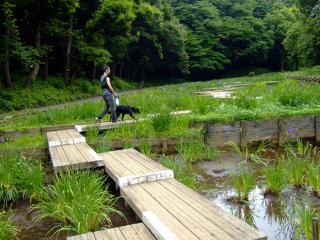 四季の森公園(7)