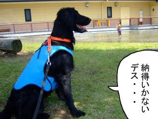 夏はやっぱり川遊びだね!(1)
