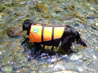 夏はやっぱり川遊びだね!(3)