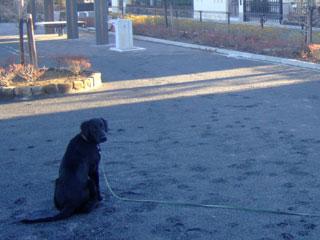 朝の公園でおすわり