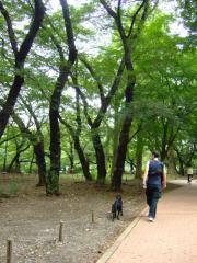 井の頭公園~吉祥寺散策(2)