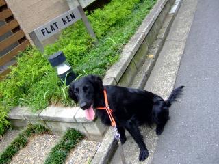 フラット犬(1)