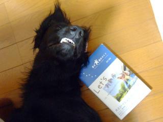 犬本紹介その23-「東京犬散歩ガイド」(1)
