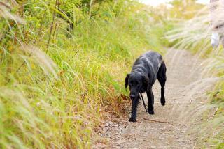 休日の朝はロング散歩(2)