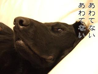 ルーアくんからひとこと(1)