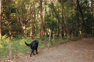 泉の森公園(2)
