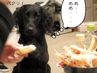 カニ鍋(3)