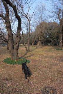 所沢航空記念公園へ行ってみたゾ(2)