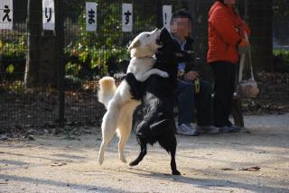 所沢航空記念公園へ行ってみたゾ(9)