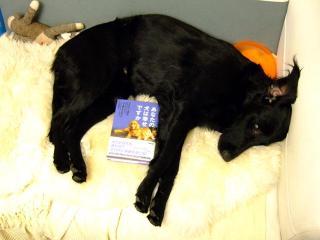 犬本紹介その30-「あなたの犬は幸せですか」(1)