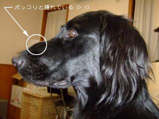 お鼻のこと(1)