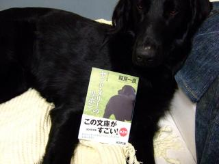 犬本紹介その31-「セント・メリーのリボン」(1)