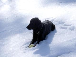 雪はやっぱり白かった1(7)