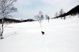 雪はやっぱり白かった2(1)