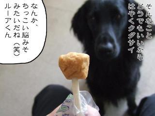 ドッグチャップス(3)