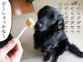ドッグチャップス(4)