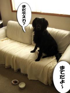 大物・・・・?(1)